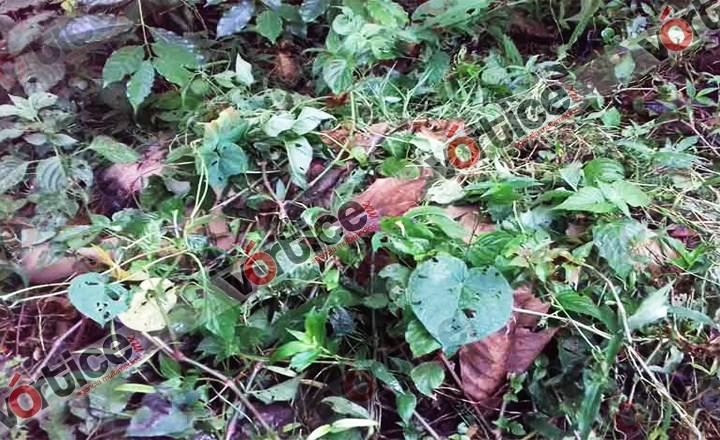 Continúan investigaciones por feminicidio en Cacahoatán