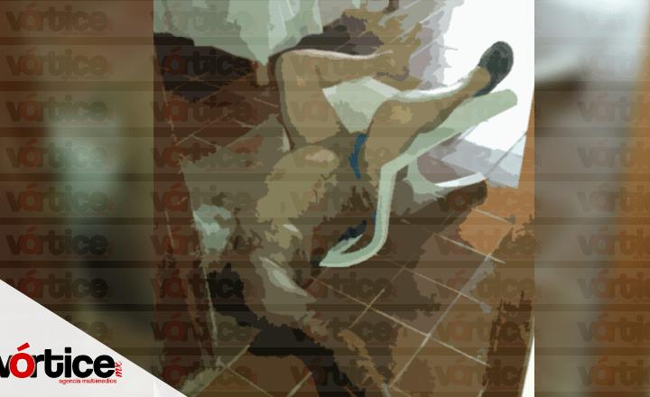 Localizan cadáver putrefacto en la colonia Las Palmas