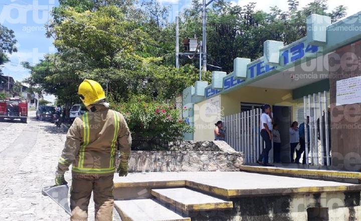 Abejas atacan a estudiantes en Chiapa de Corzo