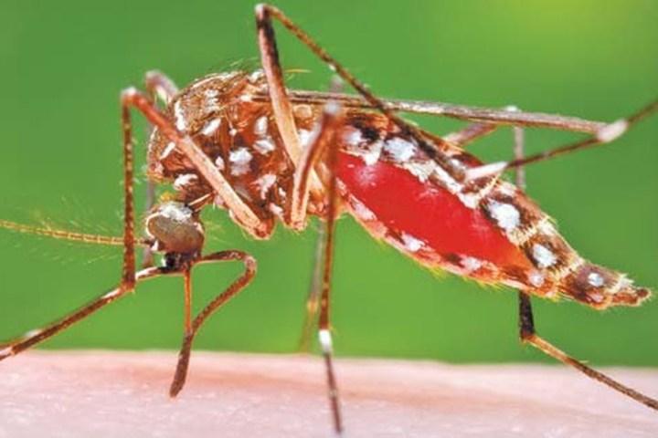 Se agudiza casos de dengue en Chiapas