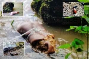 Encuentran a una pareja descuartizada y flotando en el río