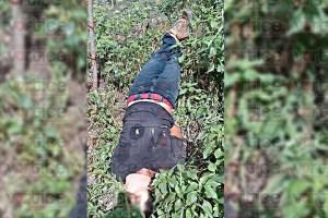 Hallan cadáver amordazado y con impactos de arma de fuego en Tuxtla