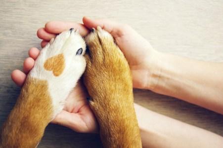 education canine aix en provence, Pertuis, Marseille, Salon de Provence, Aubagne Eduquer son chien et changer de comportement.
