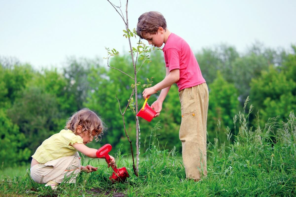 Что такое трудовое воспитание. Дети сажают деревья