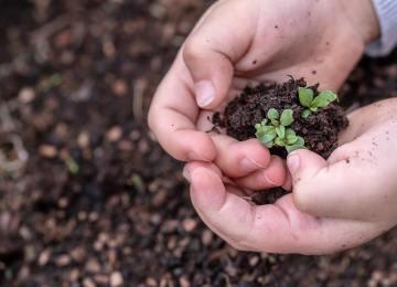 Экологическое воспитание дошкольников, ребенок держит в руках саженцы
