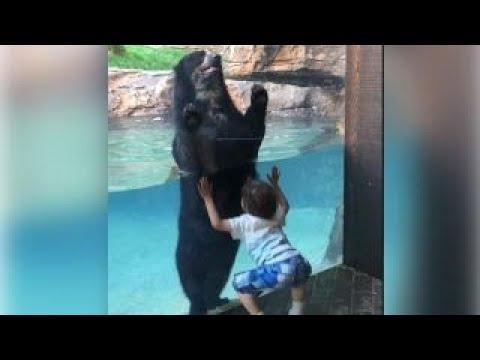 Watch: Bear mimics little boy at Nashville Zoo