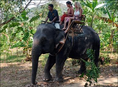 Balade à dos d'elephant