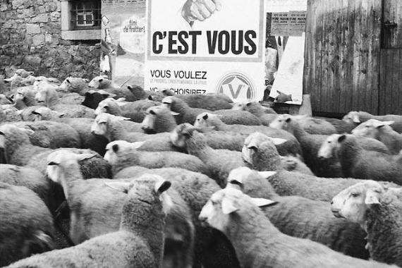 """image illustrative du billet : """"La loi du mouton"""" sur la démocratie"""