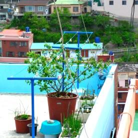 Gamcheon Cultural Village Busan 035