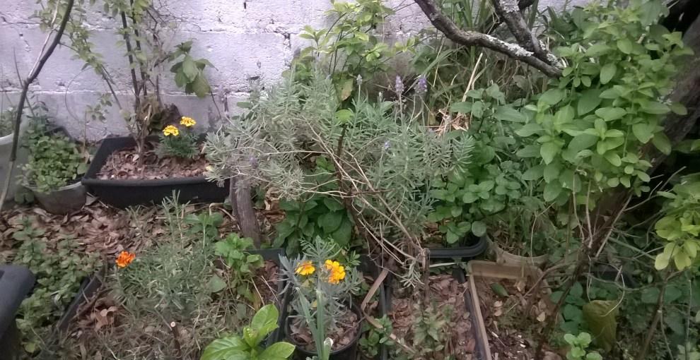 Soluções Múltiplas: horta