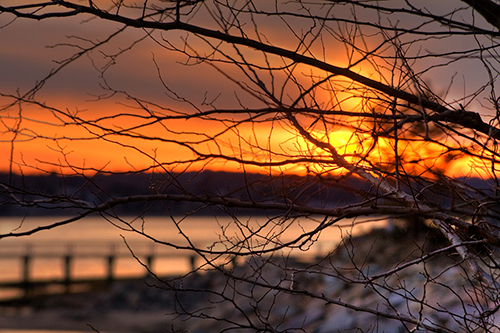sunset_trough_branches
