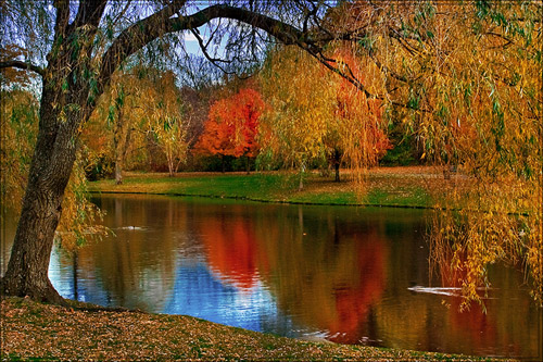 Autumn in Larz Anderson Park