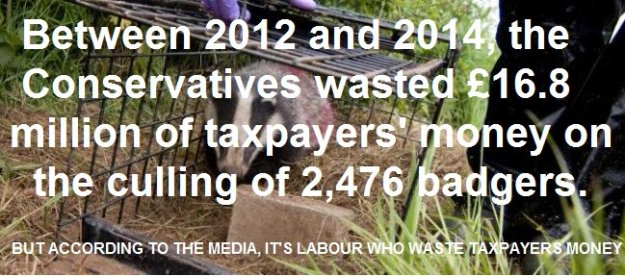 161113-badger-cull-waste-of-money