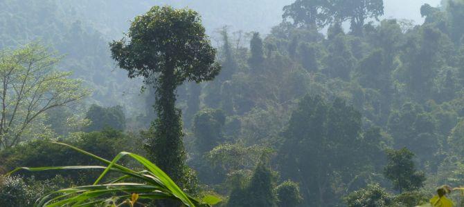 Phong Nha entre grottes et jungle