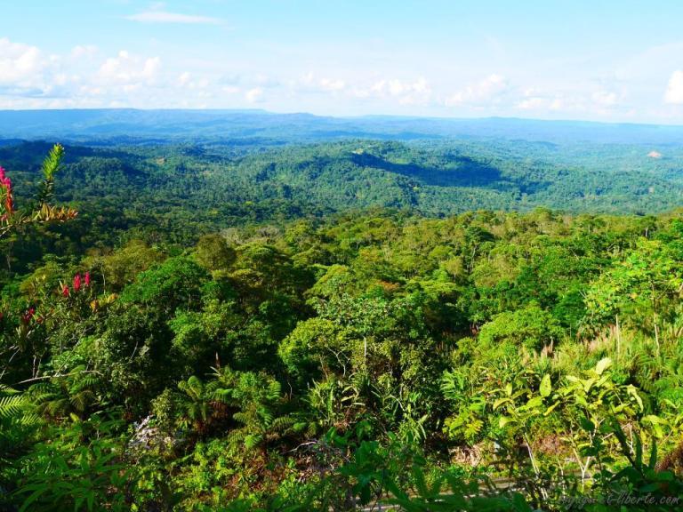 la foret amazonienne