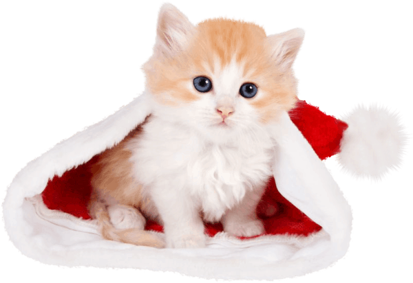wallpaper et fond d'écran chat noël