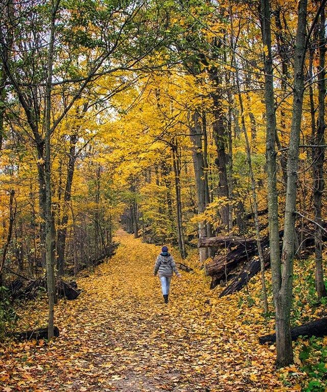 Une femme fait de la randonnée dans un sentier en forêt où scintillent des feuilles d'automne colorées
