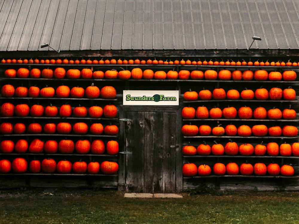 Mur de citrouilles pour égoportraits à la ferme Saunders