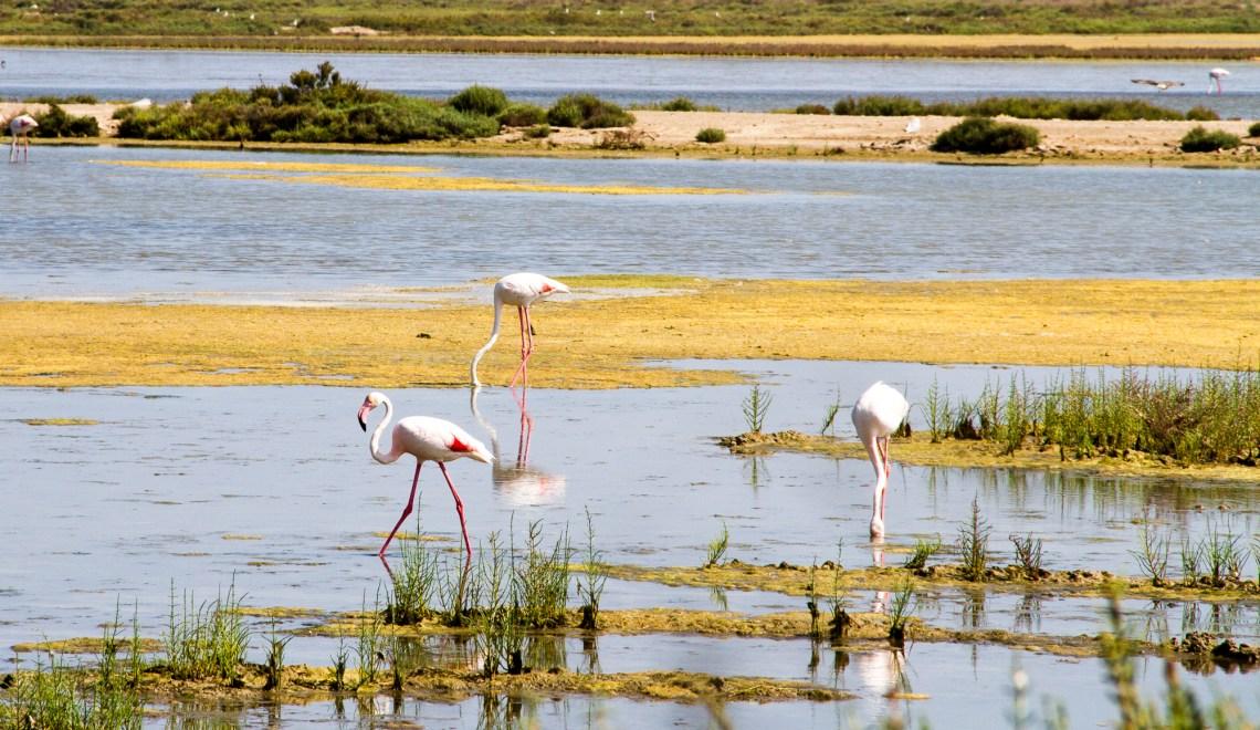 delta de l'ebre flamants roses