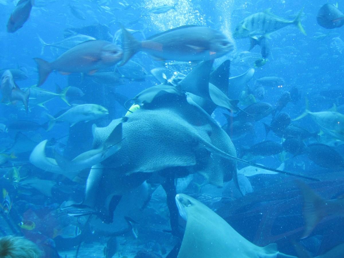 atlantis-dubai-aquarium