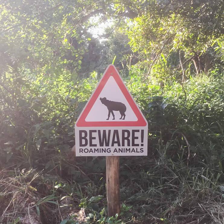panneau-hyènes