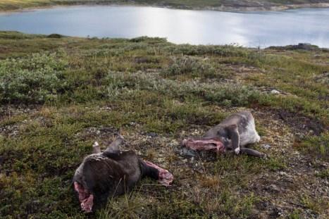 201407 - Groenland - 0187