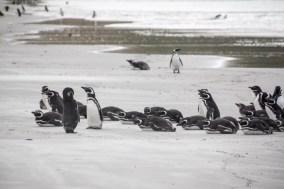 201412 - Antarctique - 0121