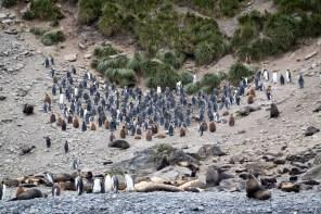 201412 - Antarctique - 0307