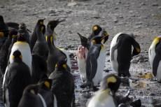 201412 - Antarctique - 0390