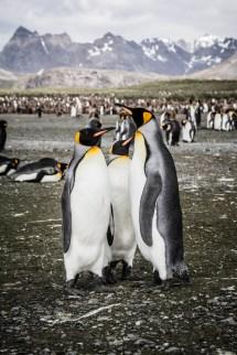 201412 - Antarctique - 0405