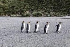 201412 - Antarctique - 0415