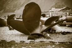 201412 - Antarctique - 0519