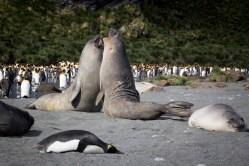 201412 - Antarctique - 0582
