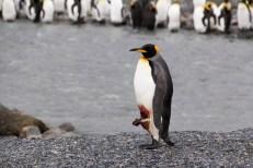 201412 - Antarctique - 0638