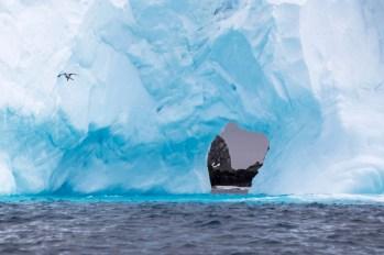 201412 - Antarctique - 0722