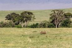201503 - Tanzanie - 0074