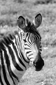 201503 - Tanzanie - 0140