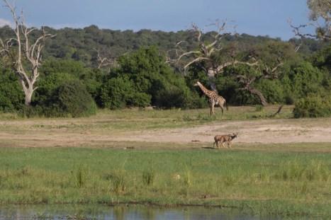 201504 - Botswana - 0025