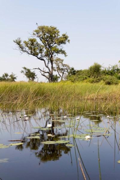 201504 - Botswana - 0053