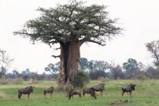 201504 - Botswana - 0057