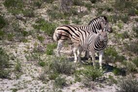 201504 - Namibie - 0027