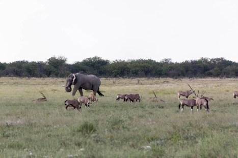 201504 - Namibie - 0051