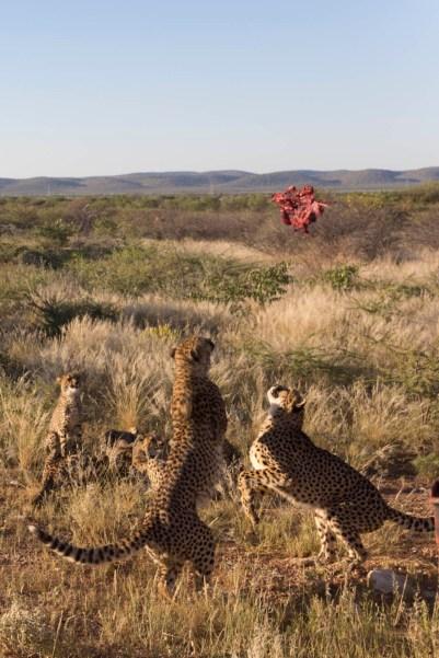 201504 - Namibie - 0212
