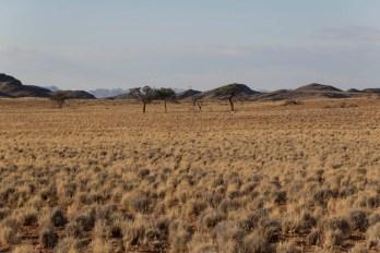 201504 - Namibie - 0484
