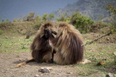 201506 - Ethiopie - 0077
