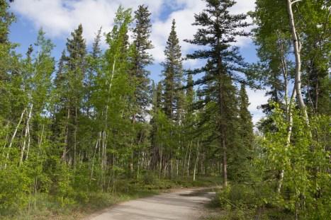201605 - Alaska and Yukon - 0247