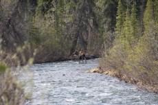 201605 - Alaska and Yukon - 0270