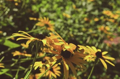 Flowers from the Botanic Garden of Adelaide