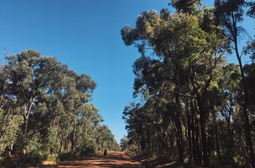 La meilleure saison pour être dans le bush du sud-ouest : l'été