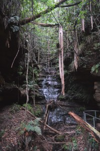 Overcliff-undercliff track à Wentworth Falls